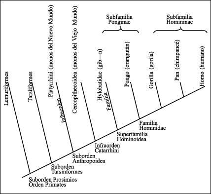 Araucaria2000.cl - Portal educacional