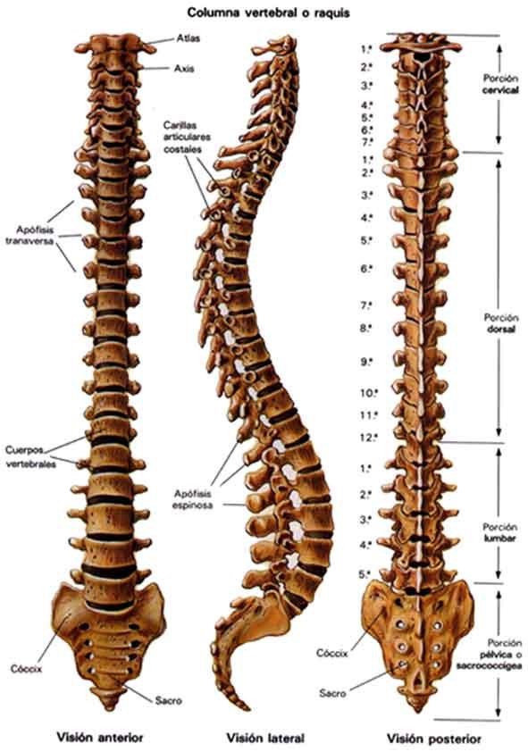 Duele la espalda y el desajuste del intestino