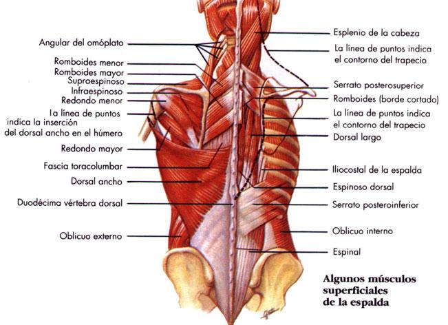 La osteocondrosis la inestabilidad de los discos la artrosis