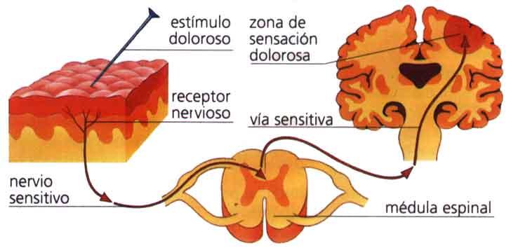 La osteocondrosis 5-6 vértebra cervical los síntomas el tratamiento